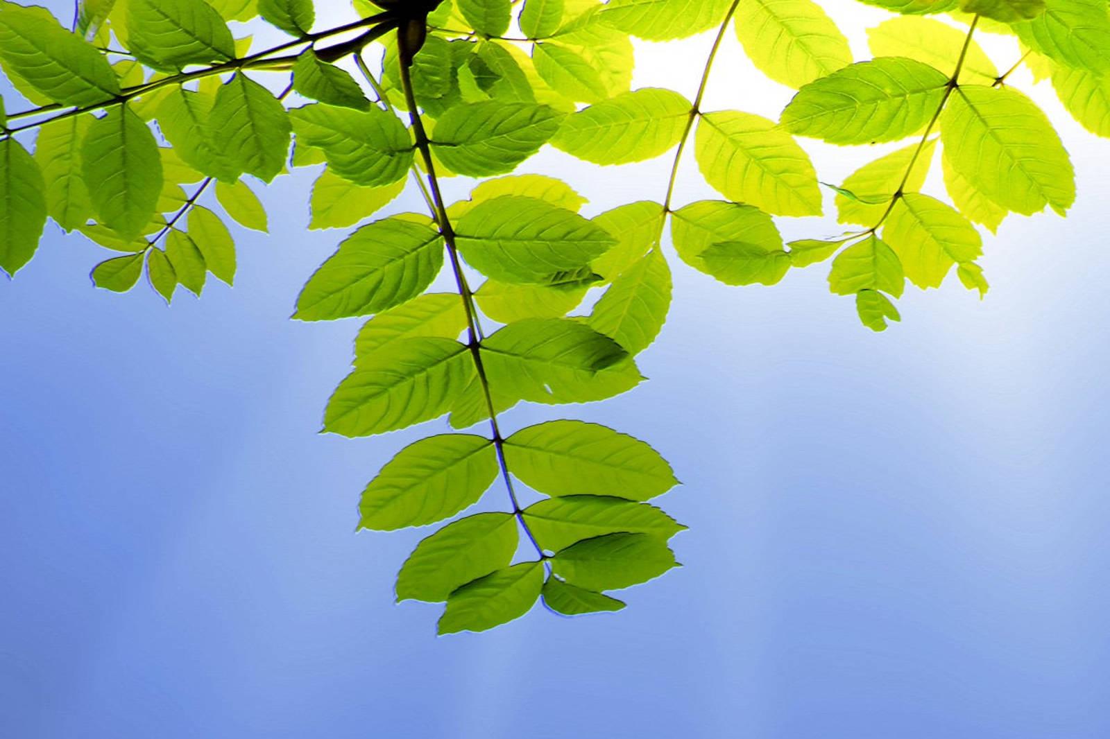 foglie-verdi-sole-aria-pulita.jpg